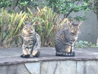 野良猫二匹